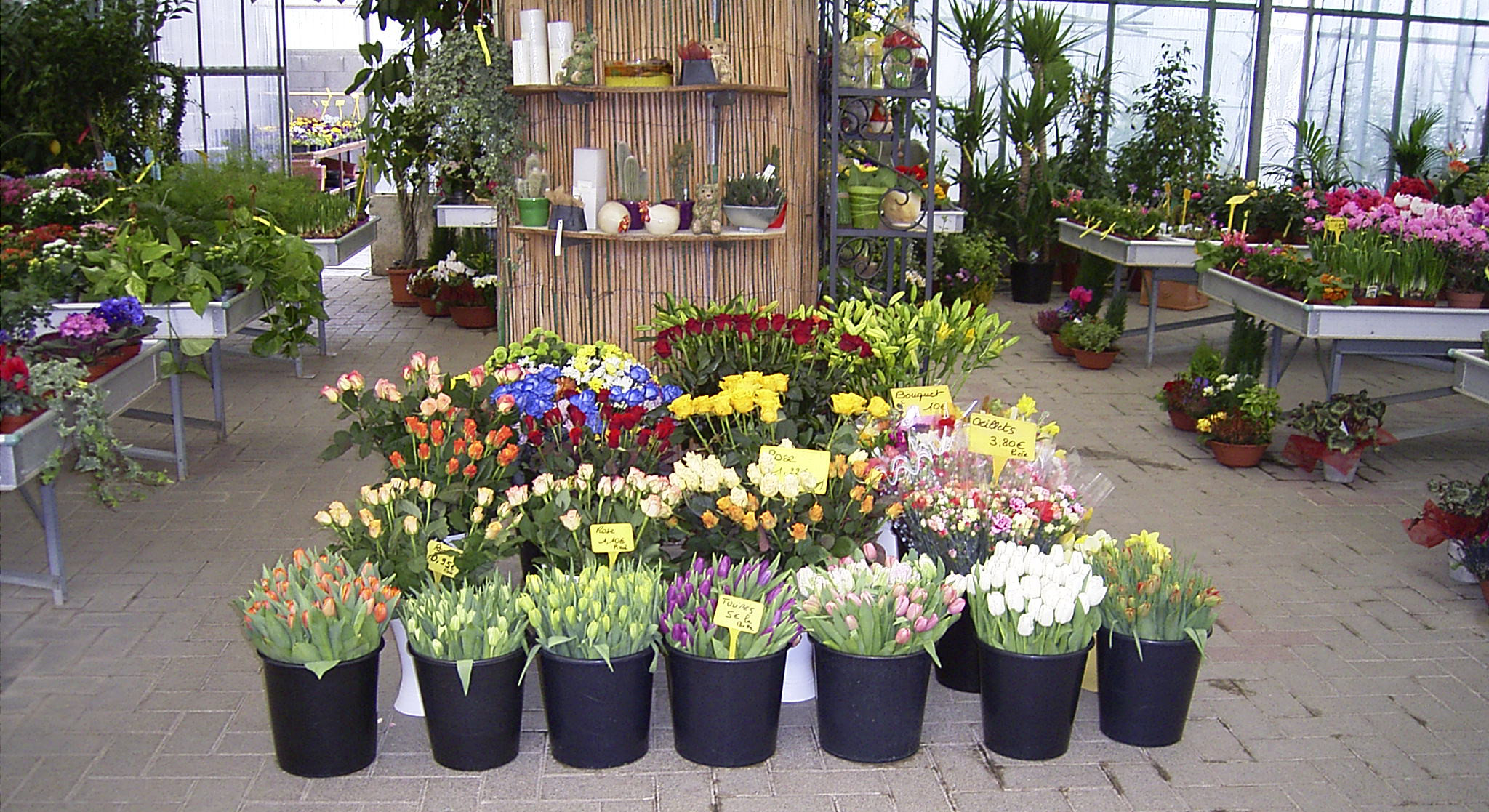 La serre, espace fleuriste